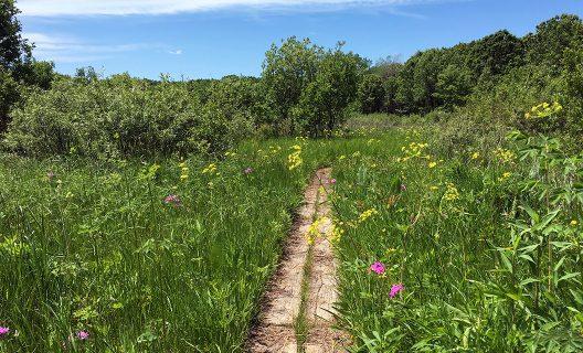 FEA_spr-l_wildflowers-grady_0844SD-528x320